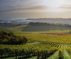 The Denbies Estate is located in Dorking, Surrey just 20 minutes drive from The Talbot Riley. With many award wining wines this is a great opportunity to learn about the geology and history of the estate and experience the changes in the vineyard through