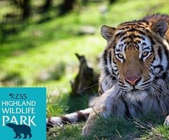 Enjoy a two night stay with us with full breakfast each morning, plus dinner on your first night, this package also includes 2 Adult tickets to the Highland Wildlife Park.